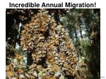 incredible annual migration