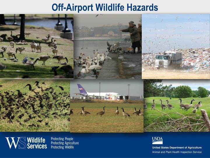 Off airport wildlife hazards