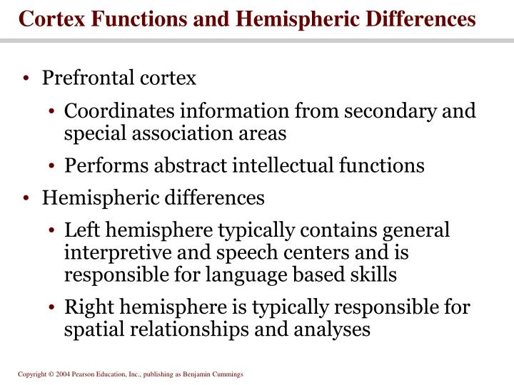Cortex Functions and Hemispheric Differences