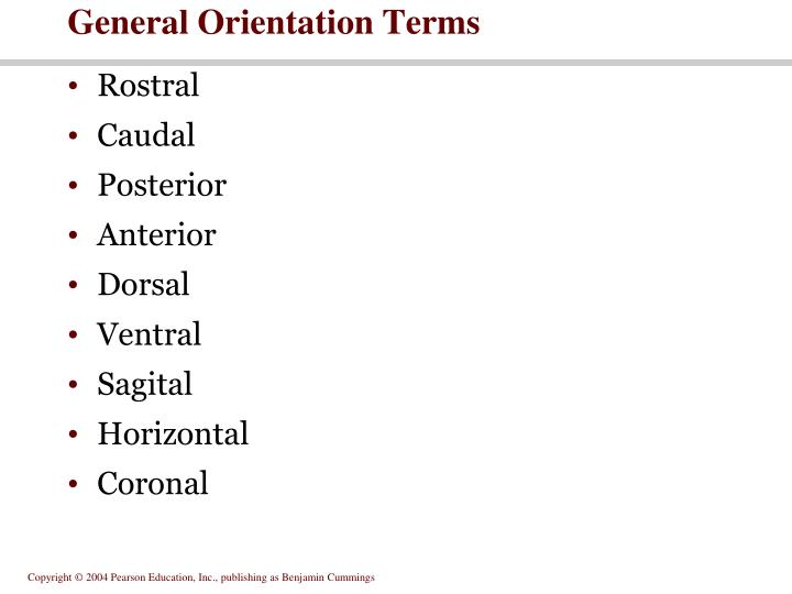 General Orientation Terms