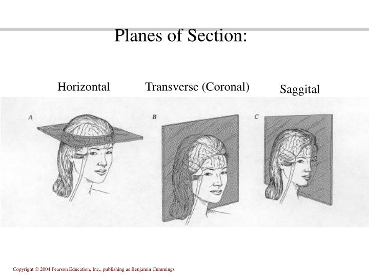 Planes of Section:
