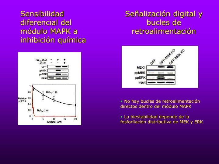 Sensibilidad diferencial del módulo MAPK a inhibición química