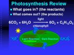 photosynthesis review1