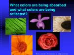 what colors are being absorbed and what colors are being reflected