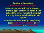 fundus inflammation10