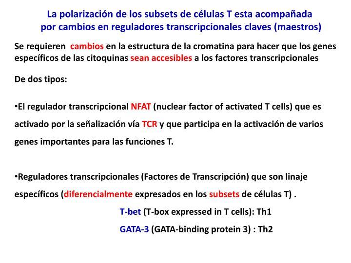 La polarización de los subsets de células T esta acompañada