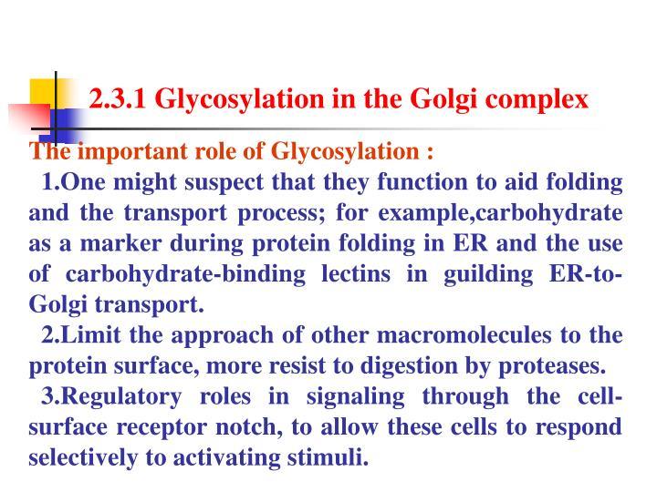 2.3.1 Glycosylation in the Golgi complex