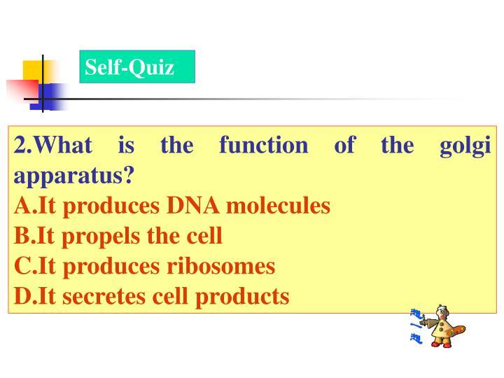 Self-Quiz