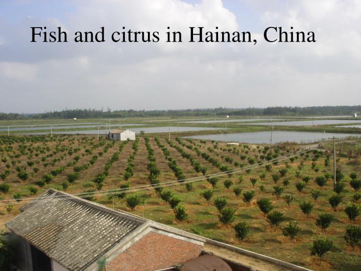 Fish and citrus in Hainan, China