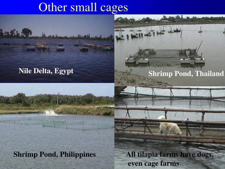 Other small cages