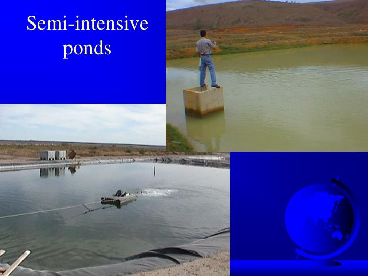 Semi-intensive ponds