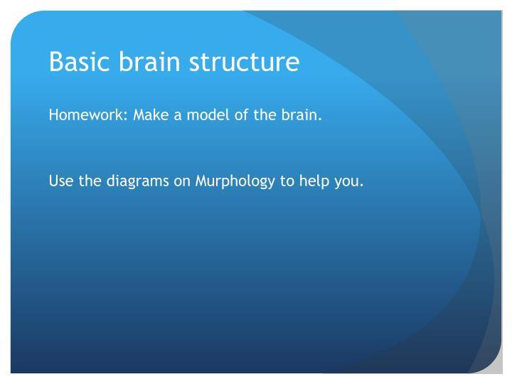 Basic brain structure