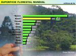superficie florestal mundial