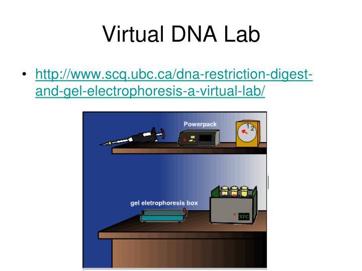 Virtual DNA Lab