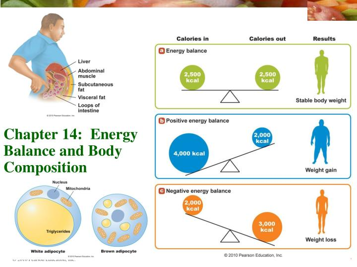 chapter 14 energy balance and body composition n.