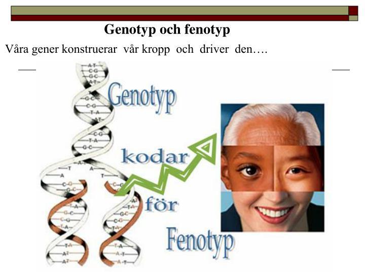 Genotyp och fenotyp
