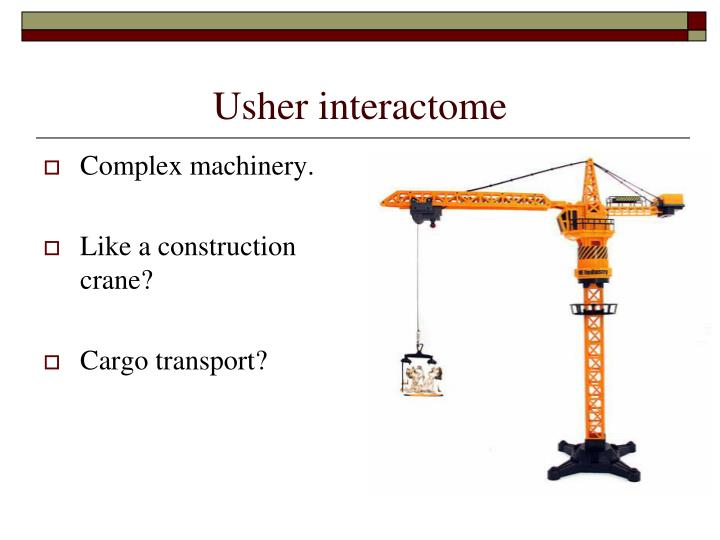 Usher interactome