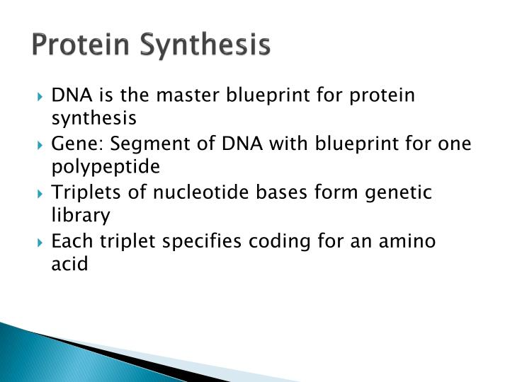 Ppt protein synthesis powerpoint presentation id5710635 protein synthesis dna is the master blueprint malvernweather Choice Image