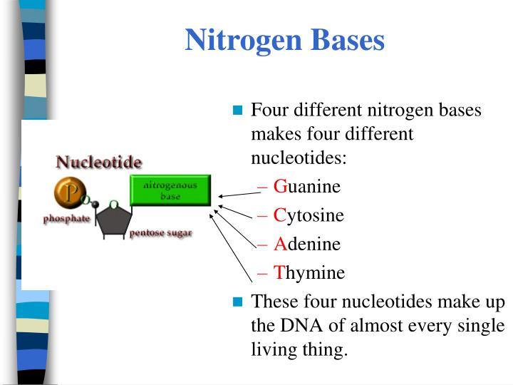Nitrogen Bases
