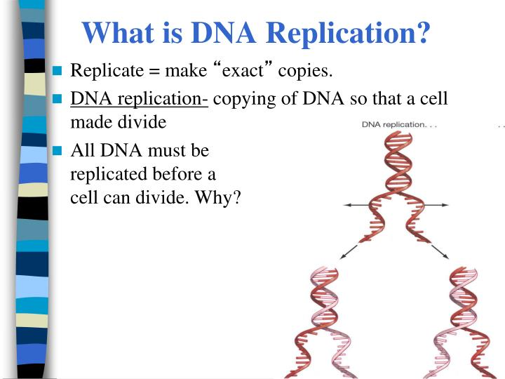 What is DNA Replication?