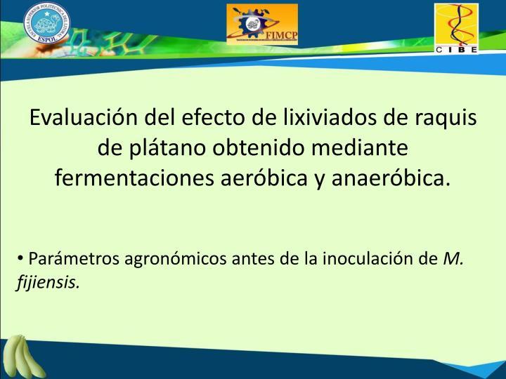 Evaluación del efecto de lixiviados de raquis de plátano obtenido mediante fermentaciones aeróbica y anaeróbica.