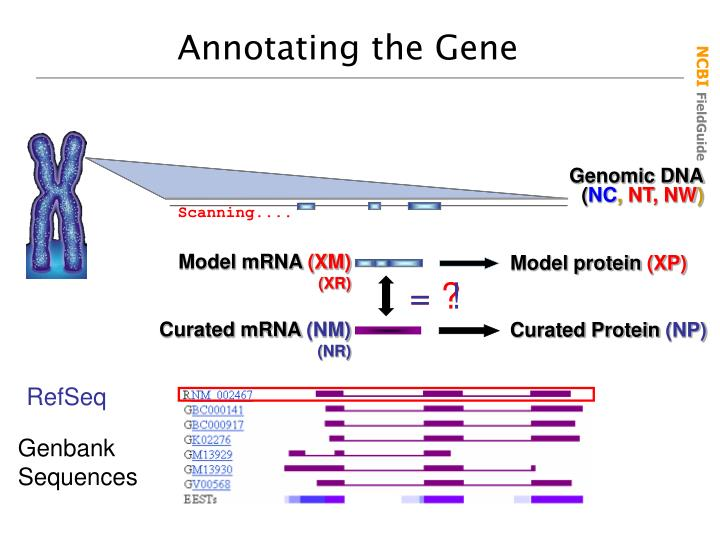Annotating the Gene