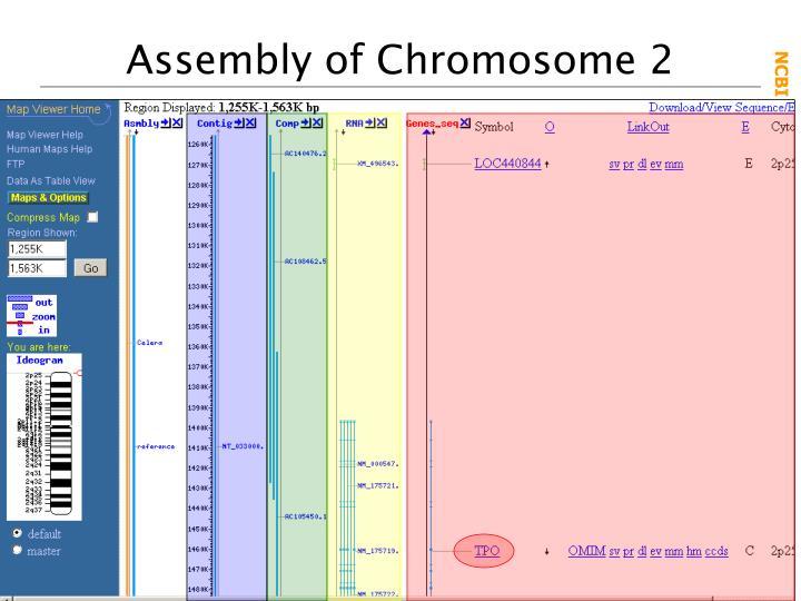 Assembly of Chromosome 2