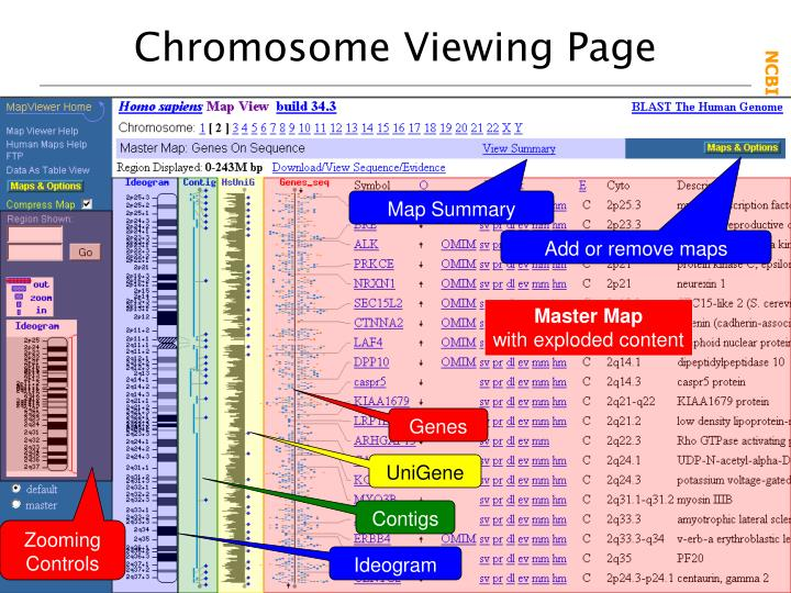 Chromosome Viewing Page