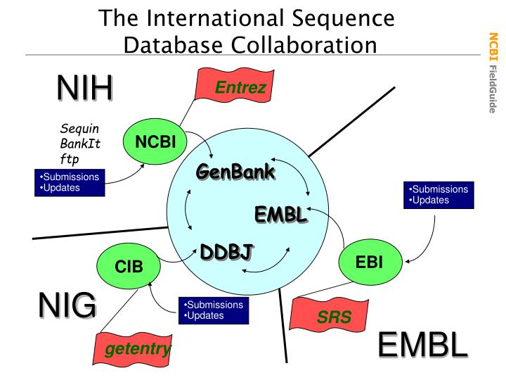 The International Sequence