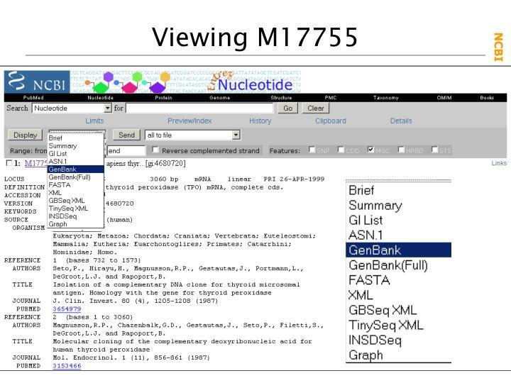 Viewing M17755