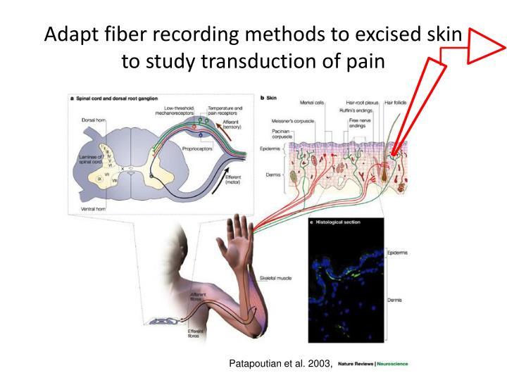 Adapt fiber recording methods to excised skin