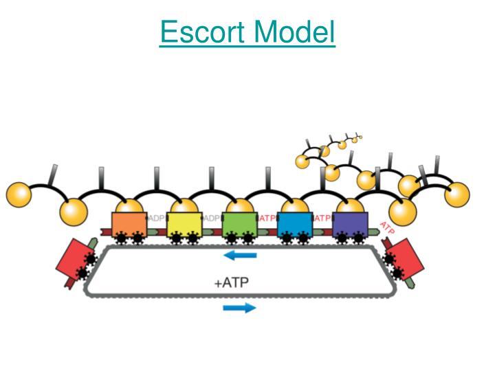 Escort Model
