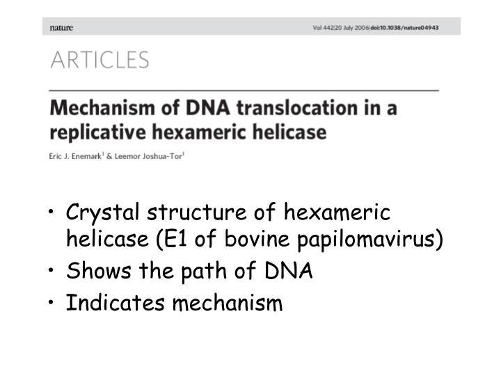 Crystal structure of hexameric helicase (E1 of bovine papilomavirus)
