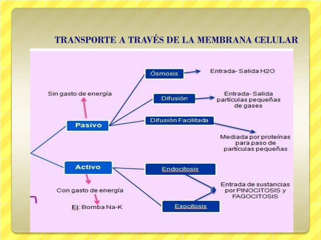 Ppt Célula Powerpoint Presentation Free Download Id 5713333