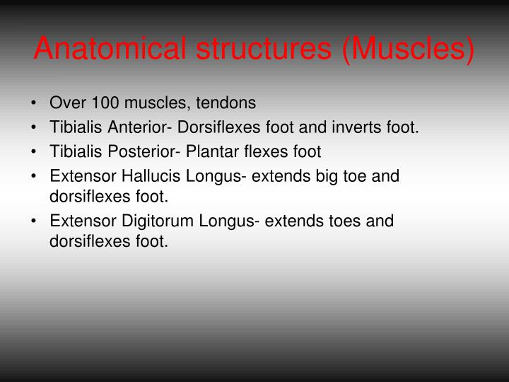 Anatomical structures muscles