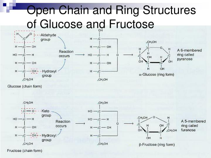Open Chain and Ring Structures of Glucose and Fructose