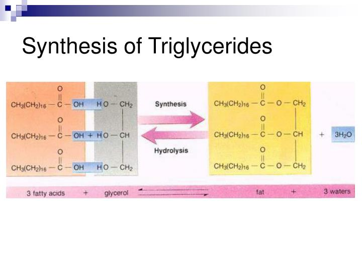 Synthesis of Triglycerides
