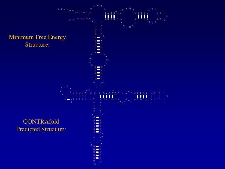 Minimum Free Energy Structure: