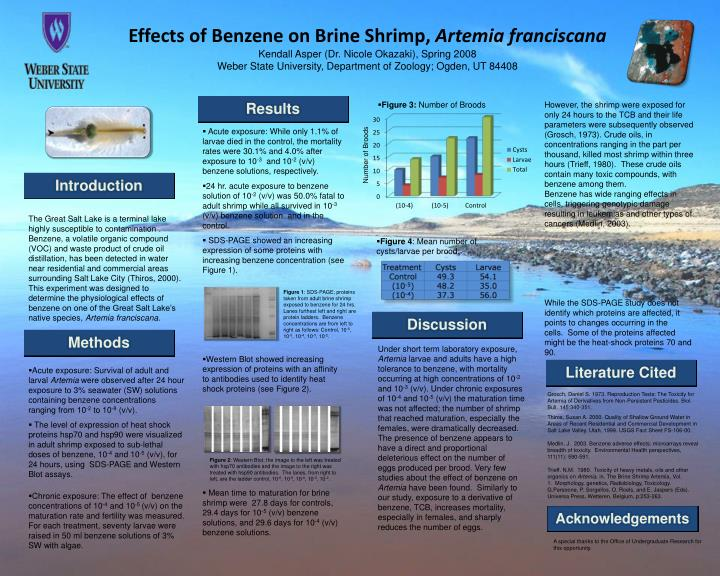 a study on brine shrimp and the effects of concentrations of motor oil in saline solutions on its su Brine shrimp can also survive temperatures of liquid air and some even can survive boiling temperaturethe effect of temperature on the hatching success of brine shrimps page 2 abstract the purpose of this experiment is to investigate the effect of temperature on the hatching success of brine shrimp they feed on microalgae.