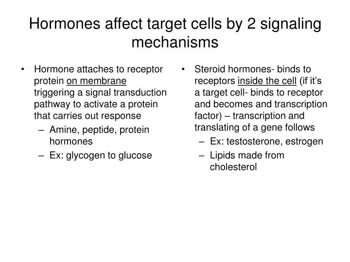 Hormone attaches to receptor protein