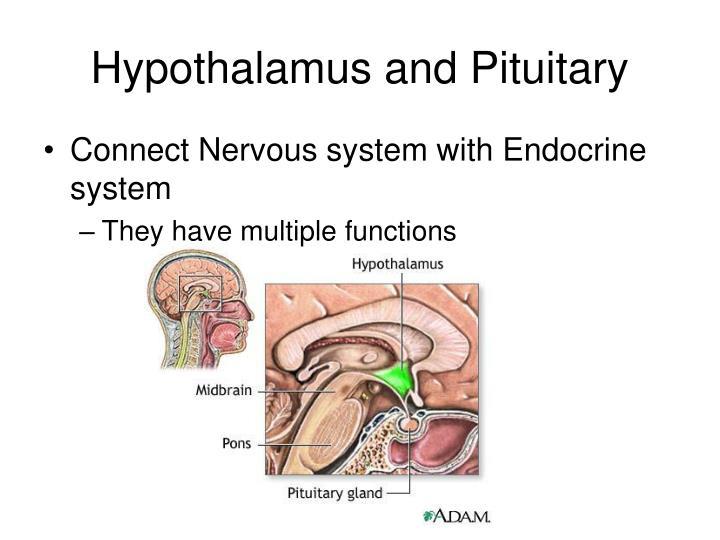 Hypothalamus and Pituitary