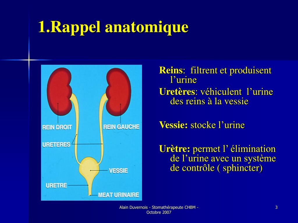 PPT - Stomies Urinaires PowerPoint Presentation - ID:5719974