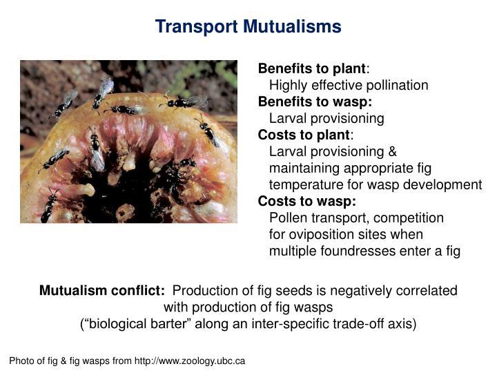 Transport Mutualisms