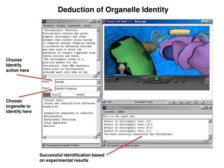 Deduction of Organelle Identity