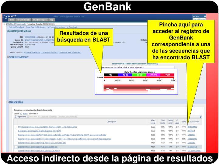 Pincha aquí para acceder al registro de GenBank correspondiente a una de las secuencias que ha encontrado BLAST