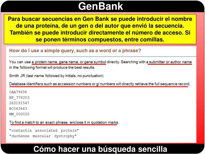 Para buscar secuencias en Gen Bank se puede introducir el nombre de una proteína, de un gen o del autor que envió la secuencia. También se puede introducir directamente el número de acceso. Si se ponen términos compuestos, entre comillas.