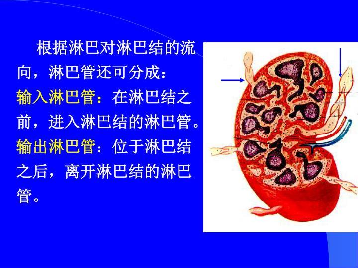 根据淋巴对淋巴结的流向,淋巴管还可分成: