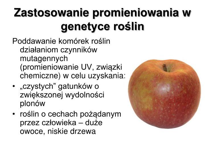 Zastosowanie promieniowania w genetyce roślin