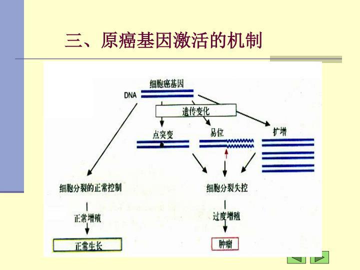 三、原癌基因激活的机制