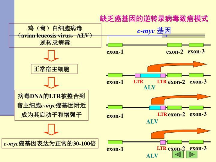 缺乏癌基因的逆转录病毒致癌模式
